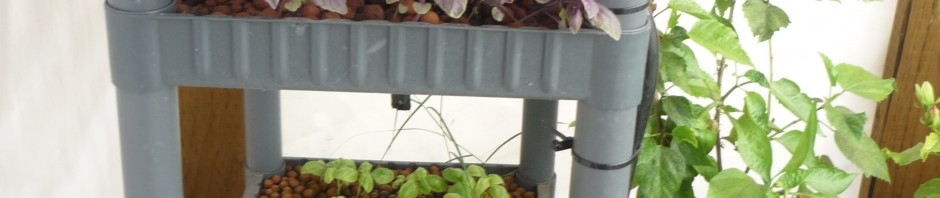 Here is the bookshelf aquaponic system 4 weeks after construction.