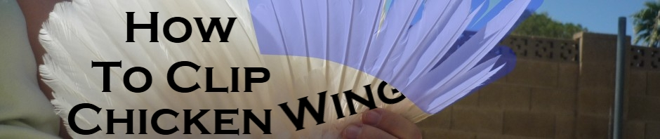 how-to-clip-chicen-wings