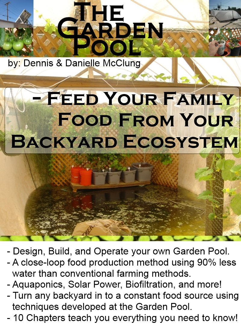 Black soldier fly composter automatic chicken feeder for Ecosystem pool