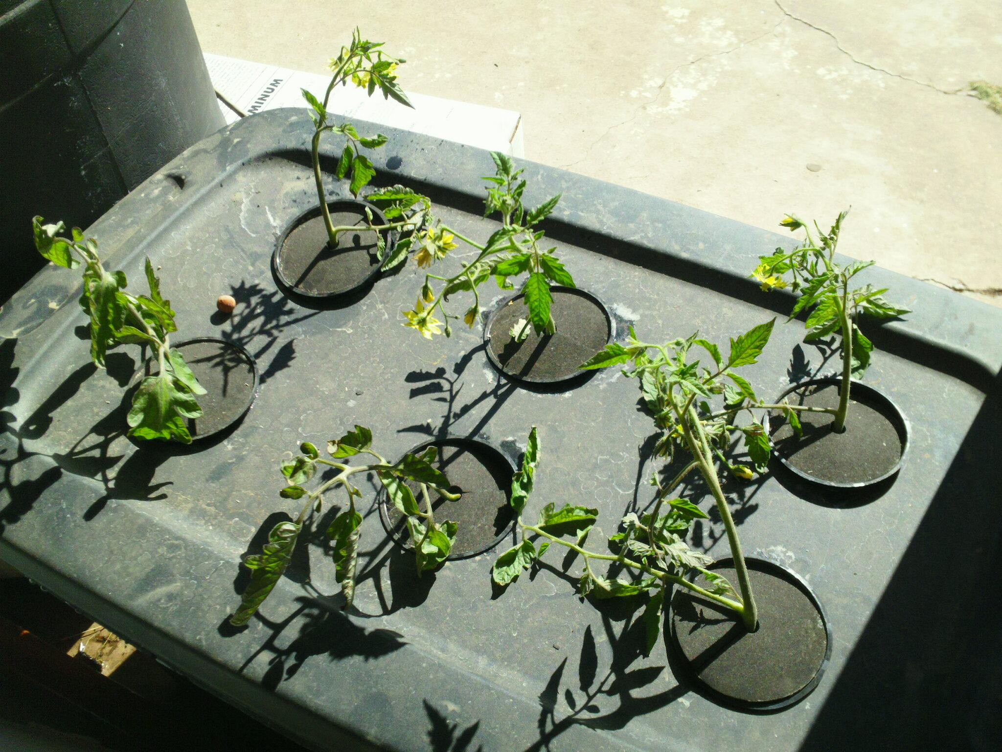 How To Make A Simple Aeroponics System Garden Pool